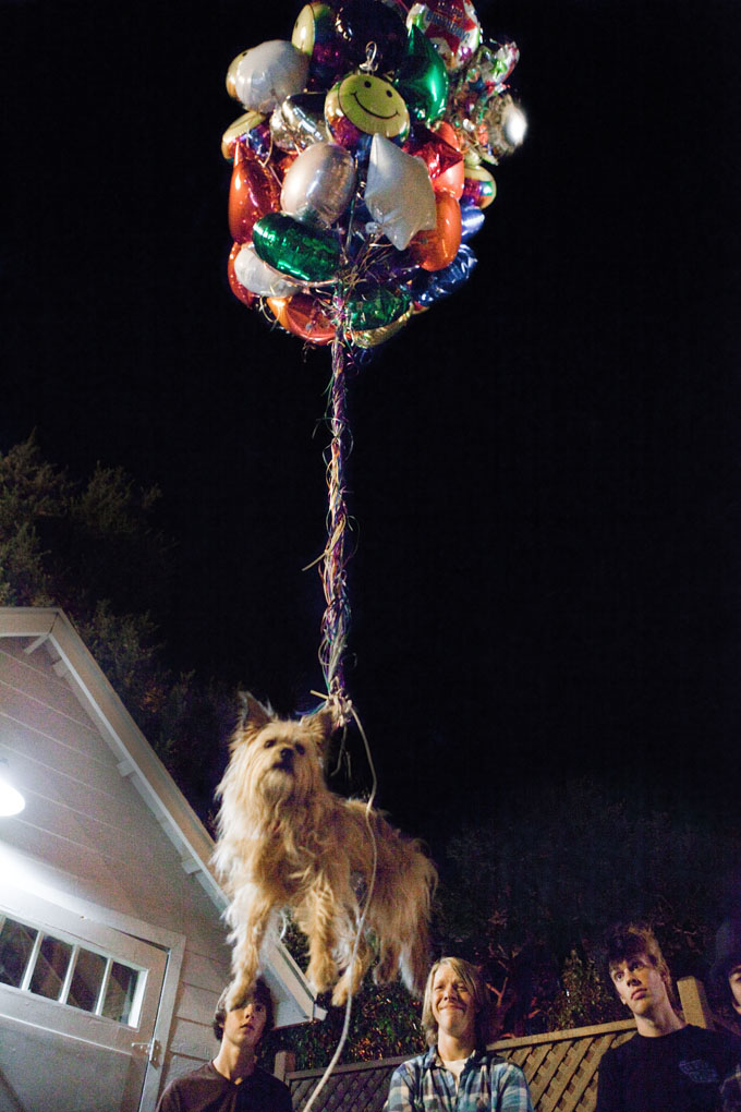Project X Dog Balloon skip crop