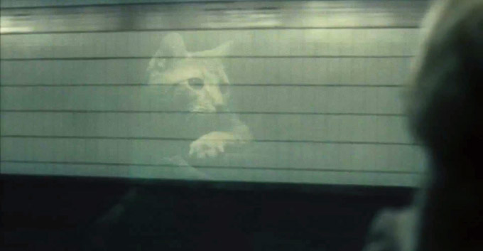Inside Llewyn Davis Cat reflection