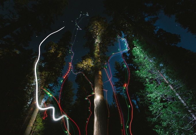 A giant sequoia lightpainted with lights from a quadcopter.