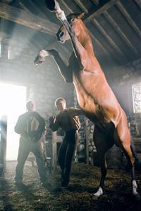War Horse Horse Rearing 2