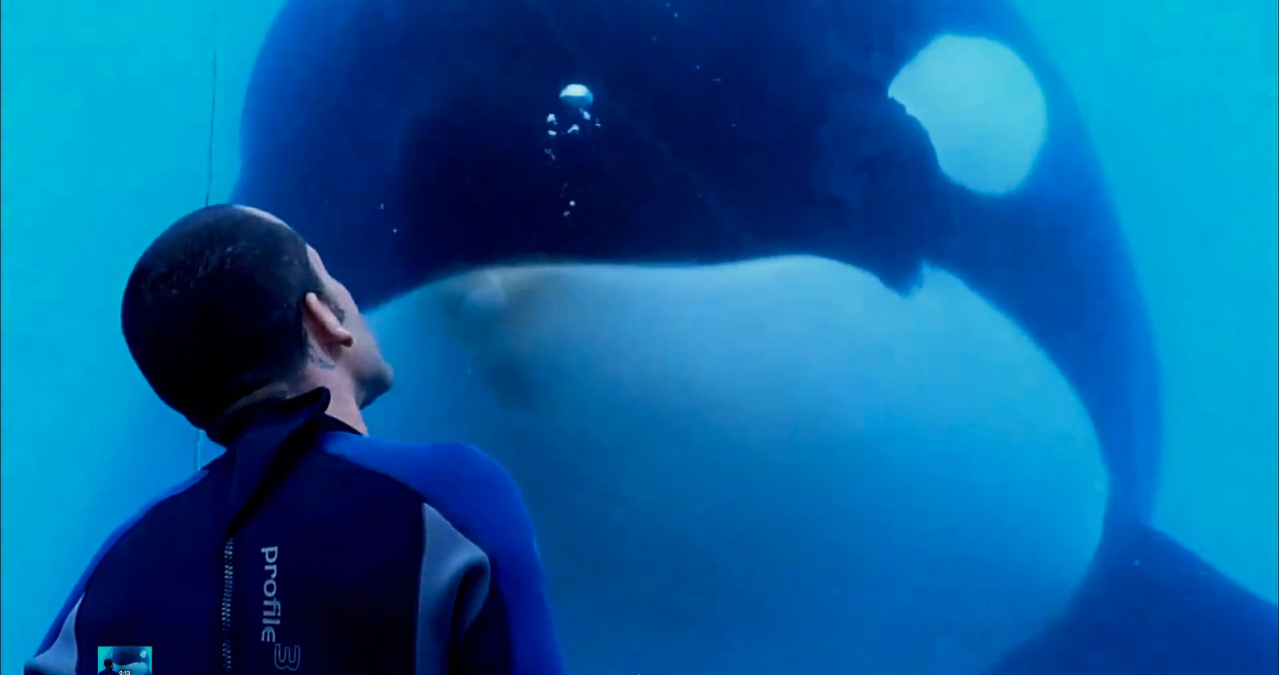 Review: 'Blackfish' Is A Heartbreaking & Effectively Damning ...