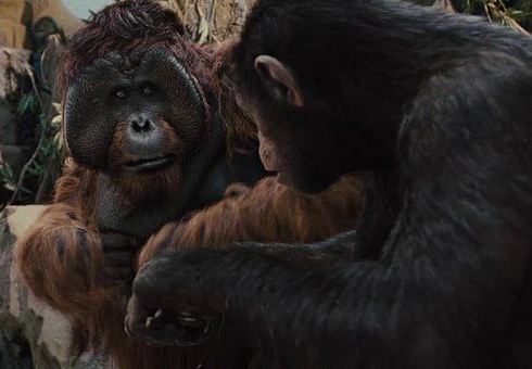 A description of attack of the apes after studying evolution